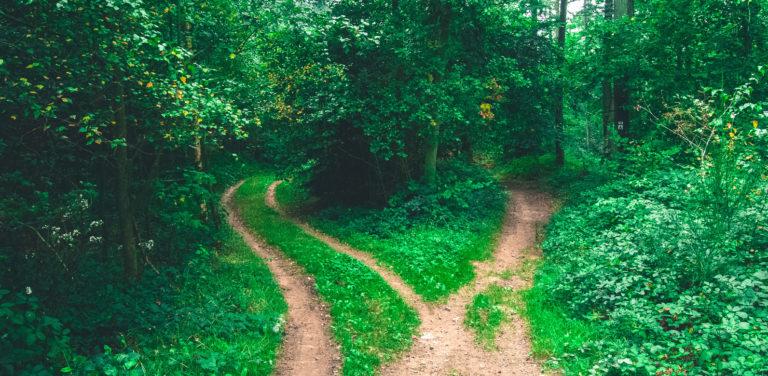 Decisions Decisions by Camille Hanson - The Holistic Pursuit