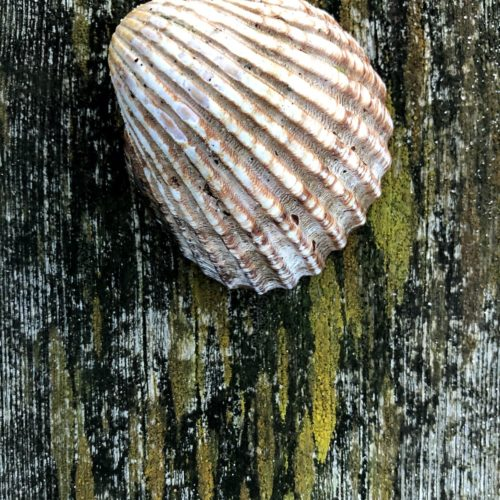 The shell is the symbol of Santiago and the famous Pilgrimage